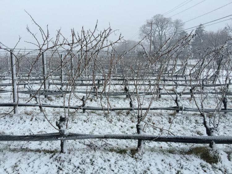 Snow_Vines